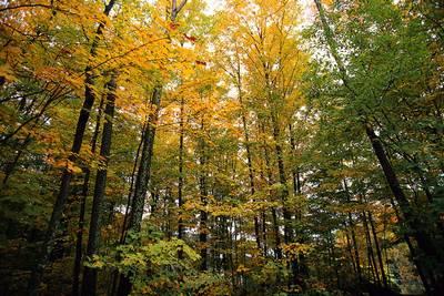 Ces jolies tonalités de couleurs mélangées… C'est l'automne que j'affectionne.