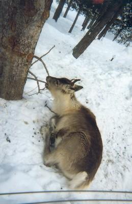Parc animalier des Angles, février 2003
