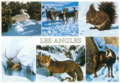 Les animaux des Pyrénées