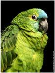 Perroquet (qui parle !)